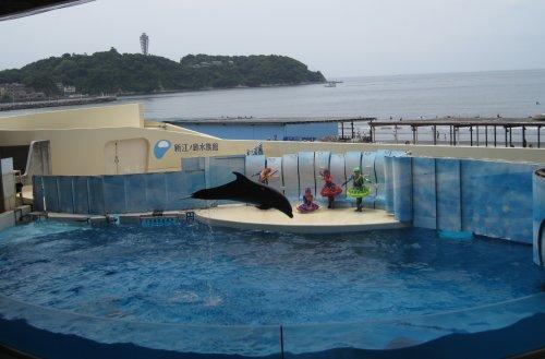 新江の島水族館3.jpg