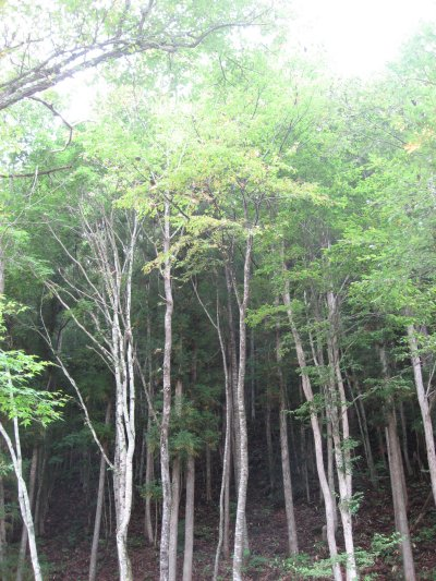 木々.jpg