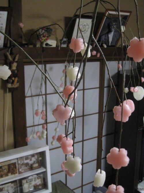 稲の花1.jpg