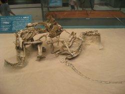 格闘化石.jpg